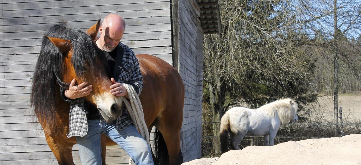 Hevostaito on sopuisaa keskustelua ihmisen ja hevosen välillä