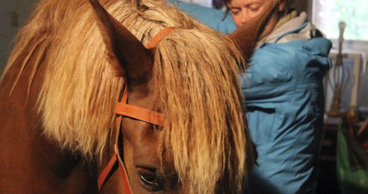 Hevostaito on tunnun ja tekniikan tasapainoa