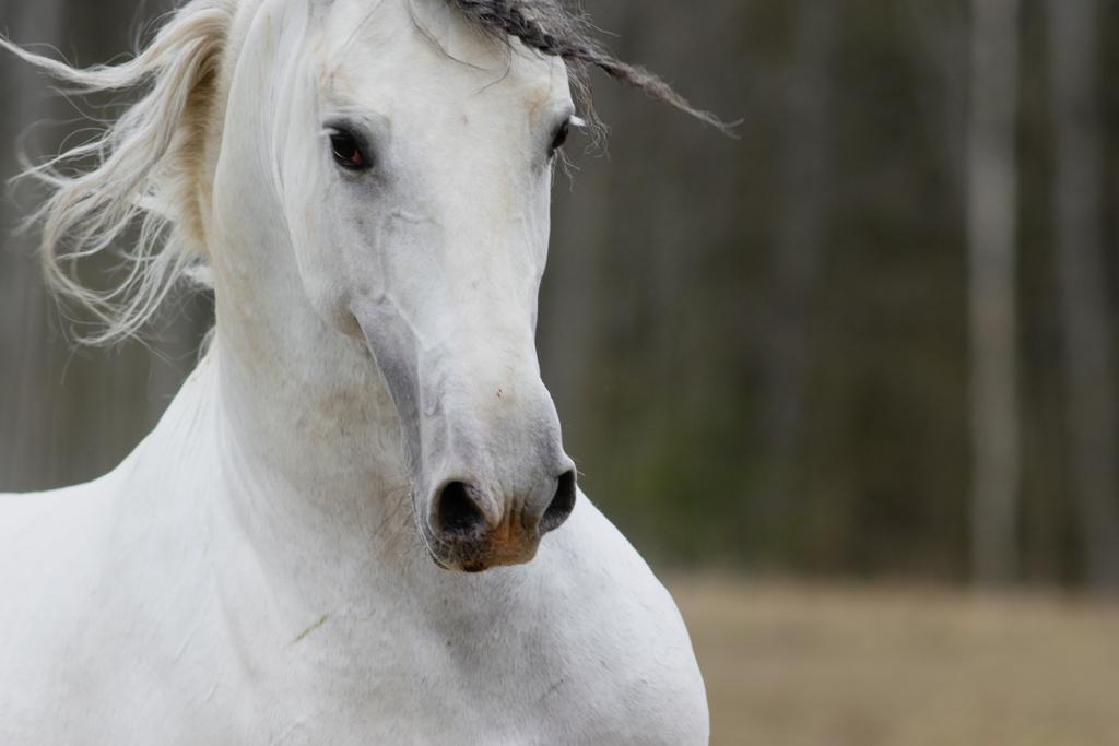 Hevostaito ja maastakäsin työskentely Esa Korhonen